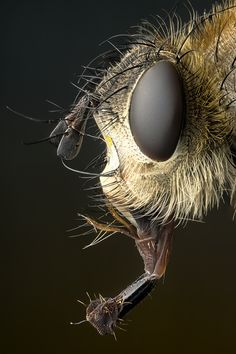 Fly by Markus Reugels Insect Eyes, Insect Art, Microscopic Photography, Insect Photography, Macro Pictures, Nature Pictures, Beautiful Creatures, Animals Beautiful, Microscopic Images