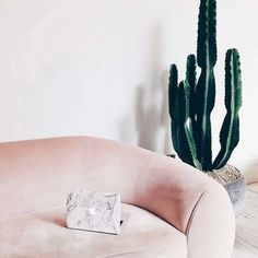 23 images that show how to style indoor plants: Cacti bring a Southern Californian summer vibe to any house. Image credit: Instagram/uniqfind