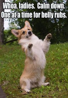 21 Funny Animal Pics for Your Monday