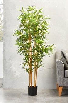 Interiors Wish List Bamboo Plant Lawn And Landscape Watering Tips Article Body: When it comes to kee Bamboo Landscape, Lawn And Landscape, Artificial Flowers And Plants, Artificial Flower Arrangements, House Plants Decor, Plant Decor, Hanging Plants, Indoor Plants, Indoor Garden