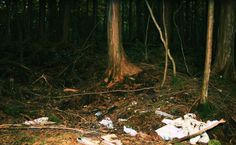 Aokigahara forest : Japan Suicidal Forest