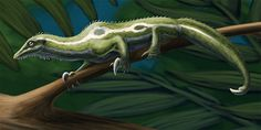 Daily Paleo Art Month #4: Drepanosaurus  These arboreal reptiles came from the Late Triassic of northern Italy, about 218 million years ago. Drepanosaurus unguicaudatus is known from just one specimen, missing the head and neck, and at around 50cm long (20in) it was the largest of the drepanosaurs.  Now, where to even start with the oddities of these creatures' anatomy? Drepanosaurs had a long lizard-like body, a bony hump over their shoulders, grasping limbs like a chameleon, long necks…