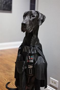 Great Dane Darth Vader