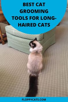 When you have a long-haired cat, grooming is a daily ritual. Depending on your cat's personality, it can be a rewarding bonding experience with your furry companion or it can be a daily moment of penitence. Using the best grooming tools for this endeavor can make this routine procedure efficient and hopefully, even enjoyable. In this article, we are going to tell you about the best brush for long hair cats that you can use to properly groom your long-haired cat. Cat Anatomy, Human Anatomy, Cat Health Care, Health Tips, Long Haired Cats, Outdoor Cats, Cat Accessories, Cat Grooming, Cat Collars