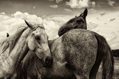 Horseville by Tijana Jevtic