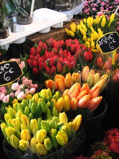 Flowers from a market in the 14th arrondissement in Paris