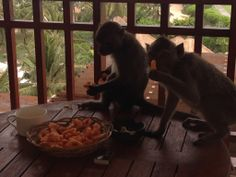 monkeys eat our snack, Nikko Bali resort