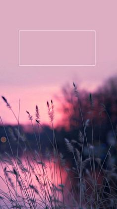 More than 100 beautiful wallpapers for your phone - Page 111 of 200 - CoCohots, Tumblr Wallpaper, Hd Wallpaper Für Iphone, Screen Wallpaper, Aesthetic Iphone Wallpaper, Flower Wallpaper, Nature Wallpaper, Galaxy Wallpaper, Cool Wallpaper, Wallpaper Backgrounds