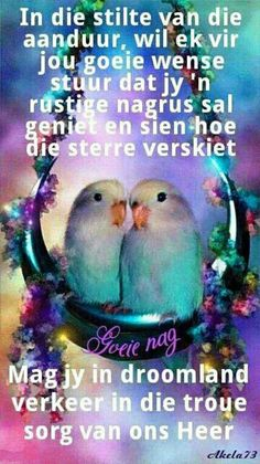 Pictures of Lovebirds and Love Bird Gifts Pretty Birds, Love Birds, Beautiful Birds, Animals Beautiful, Cute Animals, Simply Beautiful, Beautiful Images, Gif Animé, Animated Gif