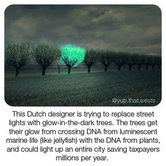 Did you know a Dutch designer wants to replace street lights with trees? This interesting idea is in an effort to reduce our… Things To Know, Did You Know, Dark Tree, Save Our Earth, Wtf Fun Facts, Tree Lighting, Faith In Humanity, Marine Life, Light Up