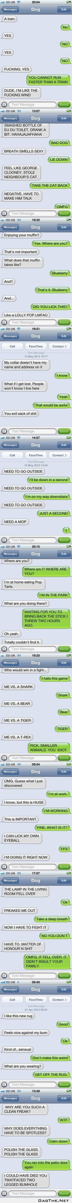 Text from dog. GOSH THESE MAKE ME LAUGH SO HARD