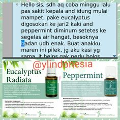 Testi_ eucalyptus radiata,  peppermint oil#testimony peppermint youngliving essential oil#youngliving #peppermint #ylindonesia