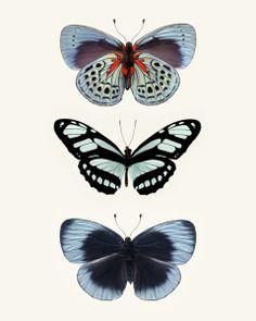 Three Blue Butterflies