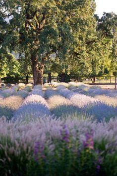 Sonoma CA Lavender Festival