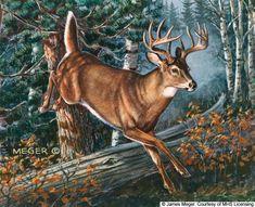 Wildlife Paintings, Wildlife Art, Animal Paintings, Deer Photos, Deer Pictures, Animal Sketches, Animal Drawings, Deer Art, Moose Art