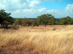 Protecting Texas for generations: The Texas Land Conservancy and centennial ranches