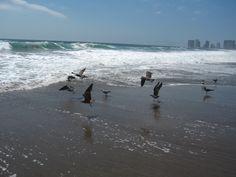 Gaviotas emprendiendo vuelo. Playa Brava, Iquique, Chile. Cámara Canon Power Shot SD550 modo manual.
