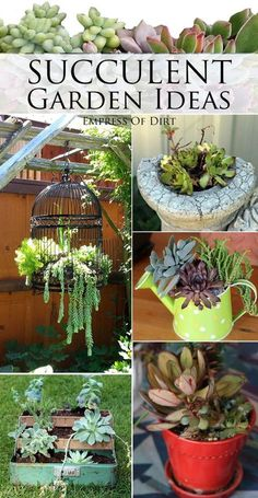 Succulent garden ideas can you get to work on the bird cage one? #succulent #cactus #succulentgardening #propagatingsucculents