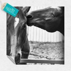 Fototapeta końska miłość. #miłość #animals #konie #czarno #biała #obraz