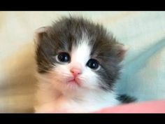 Cute Kittens And Funny Kitten Videos Compilation 2016 - YouTube