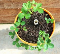 DIY Strawberry Towers Garden project