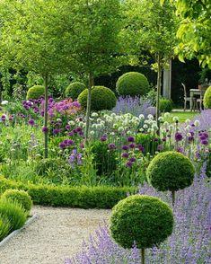 "Hedge lover on Instagram: ""Ligustrum standards floating above flowering perennials. 🌳🌳🌳 . Via @terrywinters9141 💚 . . . #hedgelover_ #topiarylover_ #topiary…"""