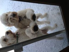 Hey it's cold out here ... let us in!!   Sadie and her sister Stella visiting Grandmom Lynn