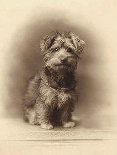 Cute little vintage photo ;-)    +~+~ Antique Photograph ~+~+  Puppy Love.