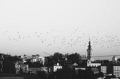 Picture Belgrade : Photo