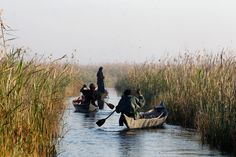 Women paddle their boats at the Chebayesh marsh in Nassiriya, Iraq on February 15, 2013. The Marsh Arabs who had farmed this area for thousands of years were badly affected by a campaign mounted by the government of Saddam Hussein in the 1990s to destroy their lifestyle. The marshes were drained of water, and hundreds of thousands of Marsh Arabs were forced to flee to cities, where they lived in poverty