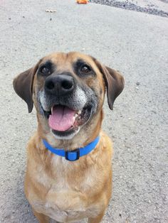 09/06/15 SL - Retriever Mix • Adult • Male • Medium Marion County Humane Society Fairmont, WV