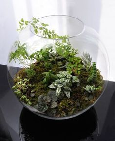 Awesome Bonsai Terrarium On The Jars 61