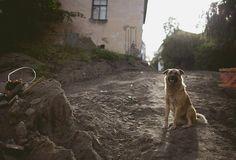 Как Оля с Левкой ездили в Выборг   58 фотографий
