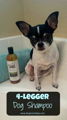 Product review of 4-Legger dog shampoo!