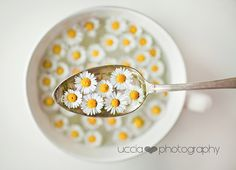 Lunch of spring! | Alessia | Flickr