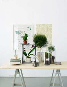 The Collectors - tinahellberg.se TINA HELLBERG IS A PHOTOGRAPHER. THIS IS A SETTING SHE CREATED TO PHOTOGRAPH FOR HER 'COLLECTIONS' SERIES. I PIN IT FOR HOW IT DISPLAYS GREEN THINGS GROWING, IN SMALL THINGS. AND THE OWL PIC