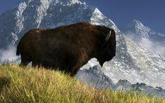 Bison Digital Art - Rocky Mountain Buffalo by Daniel Eskridge kK