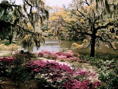 Middleton Gardens, South Carolina. - I must admit that this looks unreal...in a way..