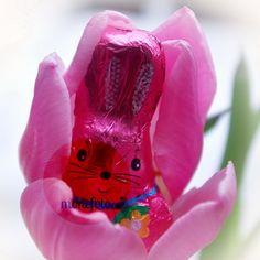 """Als die ersten """"Osterladungen"""" im Supermarkt abgeladen wurden, gab es noch Hoffnung auf grüne Ostern 2013..."""