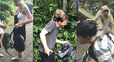 【Video】Monkey business! These mischievous monkeys are having so much fun playing with tourists in Ubud Monkey Forest, #Bali, #Indonesia.