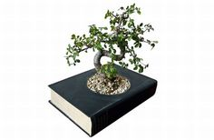 recycled old books as bonsai pot- I wonder if you could pot any plant in a book..?