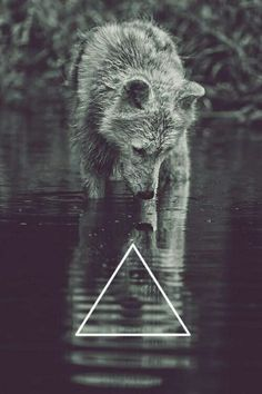 #hipster #wolf