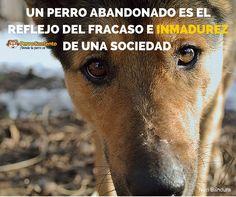 Un perro abandonado en la calle es el reflejo del fracaso e inmadurez de una sociedad, están de acuerdo?
