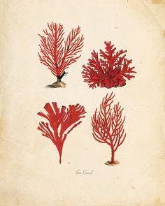 Vintage Sea Coral on Antique Ephemera Print 8x10