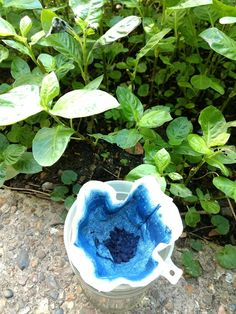 A couple of years ago I grew Japanese indigo in my London garden for the first time, and tried dyeing with fresh leaves as well as making a reduced vat. This year I planted more Japanese indigo … Indigo Plant, Indigo Dye, How To Make Ink, Natural Dye Fabric, Natural Dyeing, Vintage Perfume Bottles, Antique Bottles, Antique Glass, Food Dye