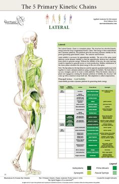 5 Primary Kinetic Chains – Welcome to Dynamic Neuromuscular Assessment™ Body Therapy, Massage Therapy, Physical Therapy, Human Body Anatomy, Muscle Anatomy, Sports Therapy, Muscle Imbalance, Medical Anatomy, Sports Massage