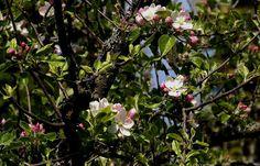 Der Saartourist wünscht allen hier einen schönen Sonntag. ... Aus dem heimischen Garten. Sitze hier, sammele Schnecken und warte auf Regen ! :-)