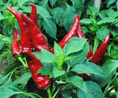 Hungarian Paprika Spice Pepper 0.3 g $2.95