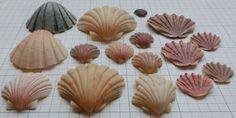貝殻 - Google 検索