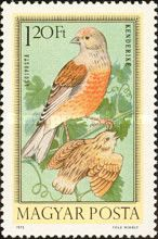 [Birds, type CZC]